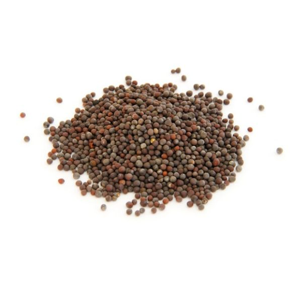 Горчица коричневая (семена)